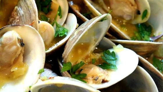sailor clams