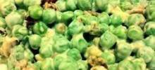 Carmel's Crunchy Pea Salad