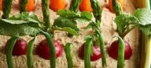 Spring Herb Hummus Vegetable Garden