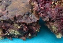 blackberry yummies
